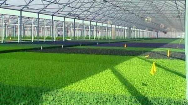 Gajenje-povrca-na-substratu-u-plastenicima