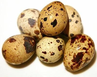 Lekovita jaja japanske prepelice