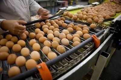 Резултат слика за proizvodnja jaja