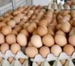 racunar u proizvodnji jaja