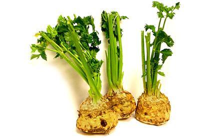 gajenje celera 12