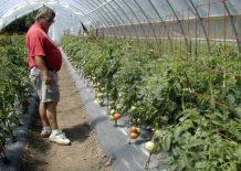 Šta sve treba da znate o sadnji povrća u plastenicima