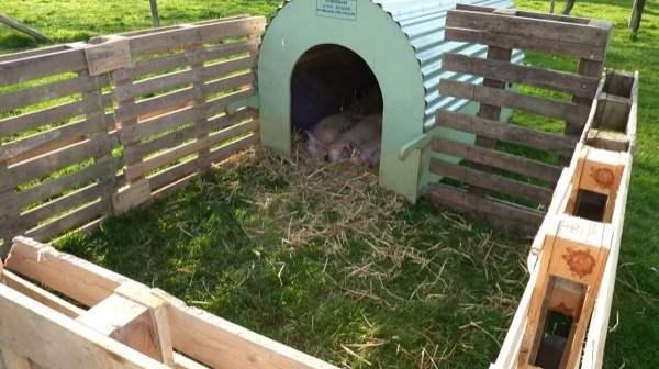 Izgradnja svinjca - kako napraviti svinjac za svinje?