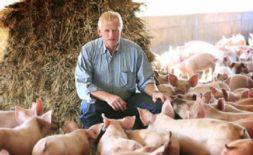 Tovljenje svinja za meso