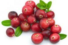 Uzgoj brusnice (Vaccinium L.)