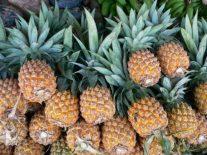 Savezi za uzgoj ananasa