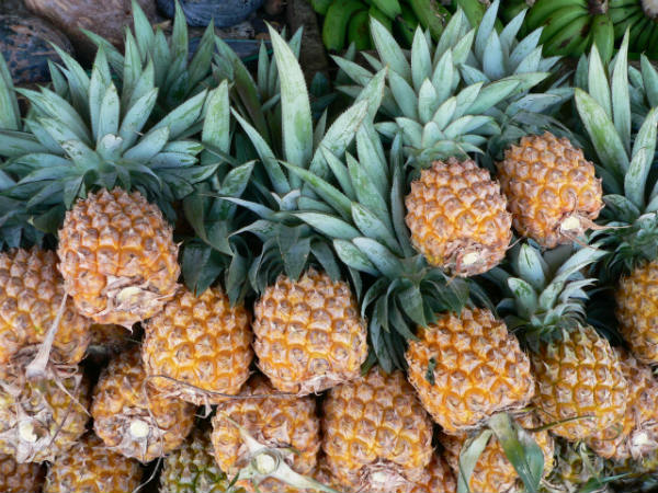 uzgoj ananasa