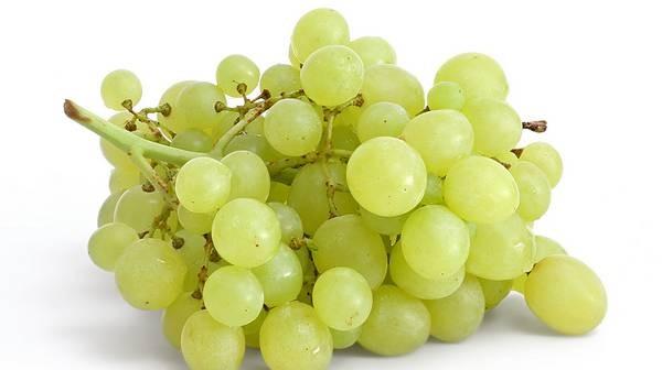 sorte grozdja