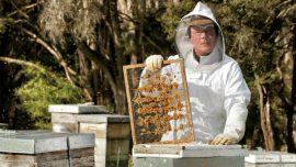 Saveti za uzgoj pčela