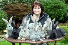 Saveti za uzgoj zečeva