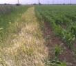 Totalni herbicid