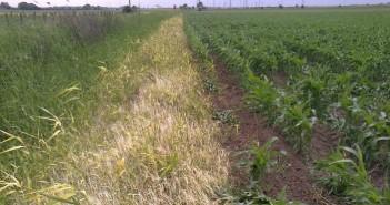 Totální herbicid na stromy