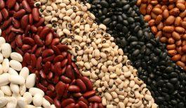 Sorte pasulja, mahurinke velike hranljive vrednosti