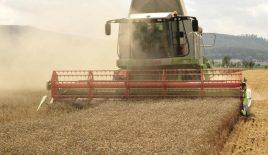 Sorte pšenice, biljke koja se uzgaja širom sveta