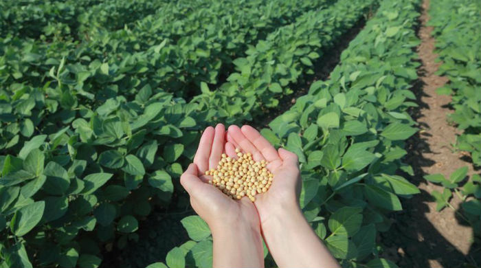 Uzgoj soje