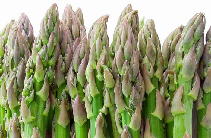 spargla biljka